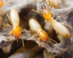 Réunion publique pour les termites @ salle Municipale