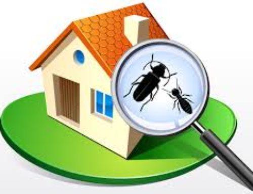 Campagne de détection et de traitement des termites